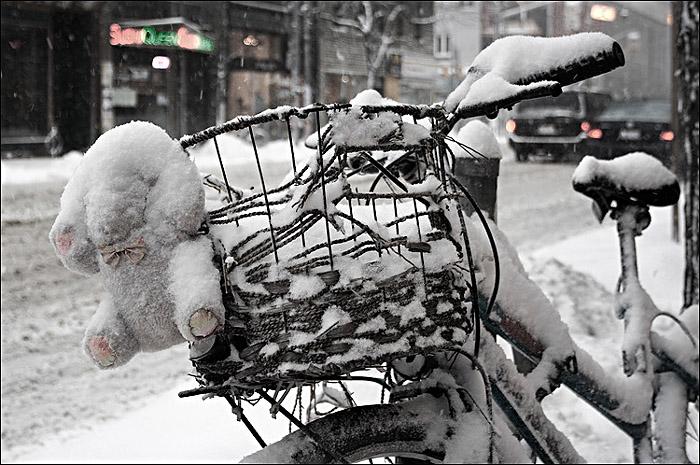 Eisbär; Copyright: wvs.topleftpixel.com