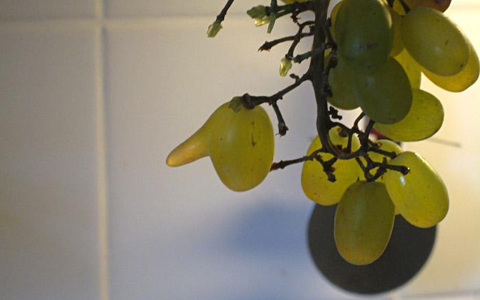Auch Weintrauben bekommen lange Nasen wenn sie lügen