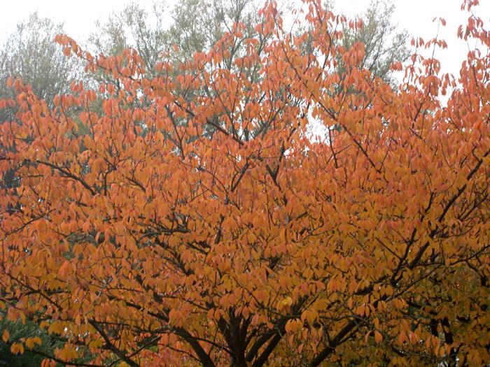 Herbststimmung im Alsterpark, Hamburg