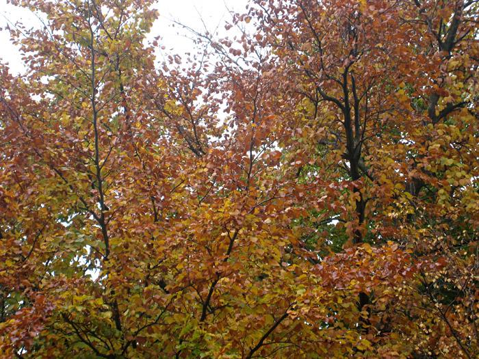 Herbststimmung in der Heinrichstraße, Hamburg