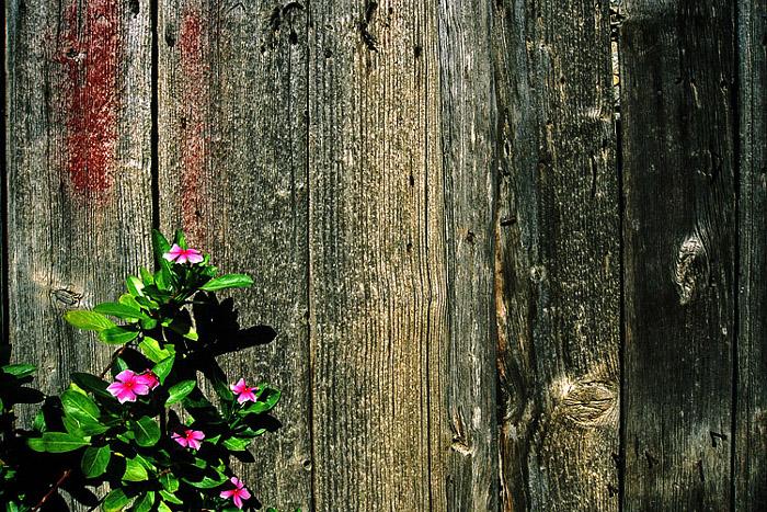 Blumen vor Holzwand auf Kreta