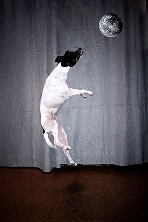 Hund mit Spiegelkugel