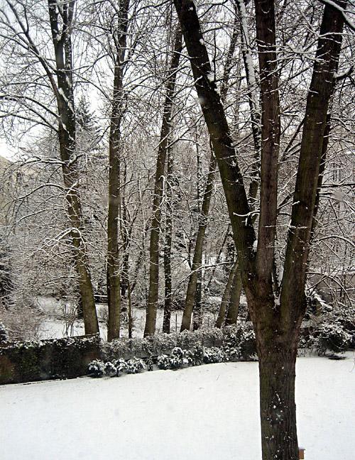 der eingeschneite Garten