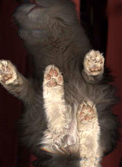 gescannte Katze